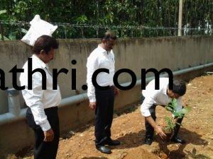 Plant Sampling